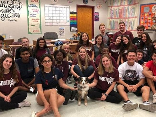 Puppy love eases Florida students' pain