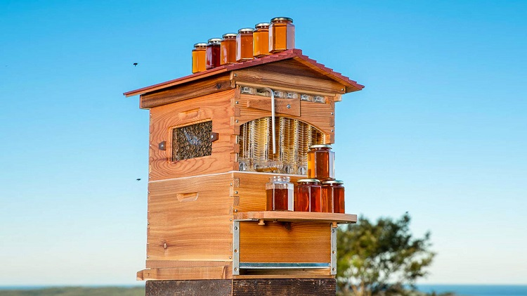 Saving Bees Thanks to a Revolutionary 'Honey on tap' Beehive