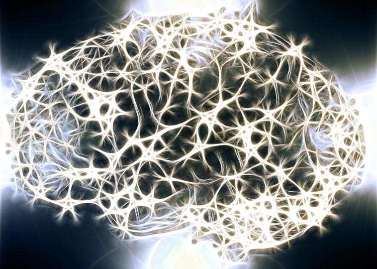 Neurons regenerate most of our lives