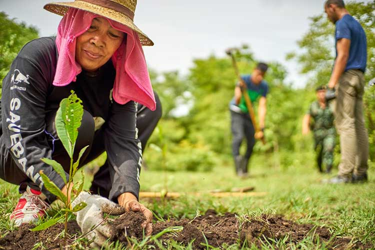 Nonprofit Organization Plants 250 Million Trees