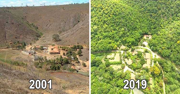 A Brazilian Couple Restore A Destroyed Forest
